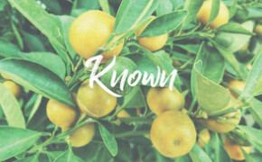 Psalm 1 | KNOWN