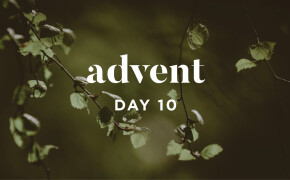 ADVENT 2019 | A Righteous Branch
