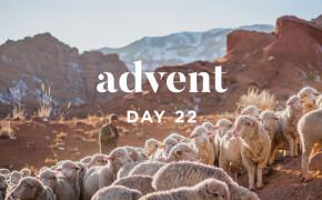 ADVENT 2019 | The Good Shepherd